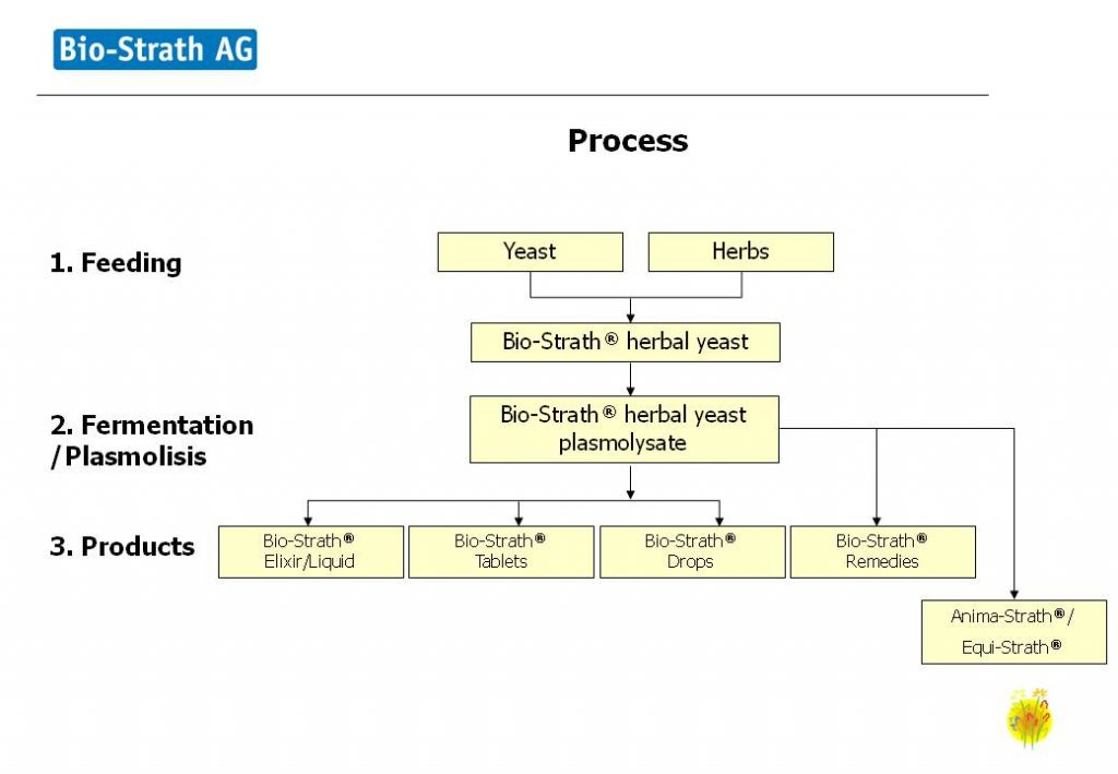 The Strath creation process
