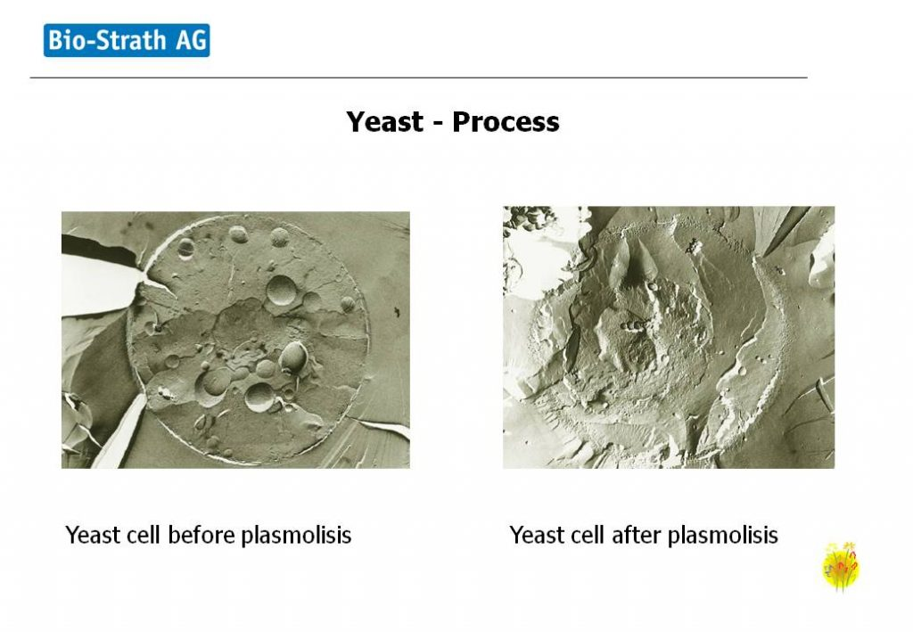 Yeast Process continued