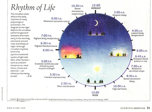 Circadian-rhythm-chart-on-physiology