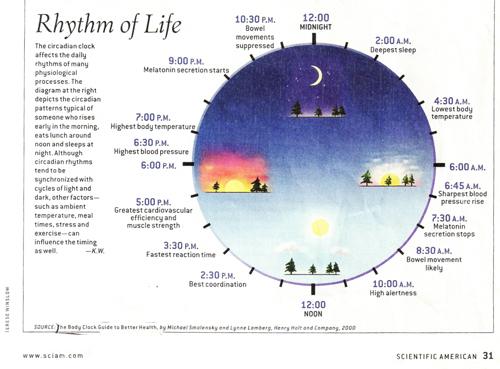 Circadian-rhythm-chart-on-physiology